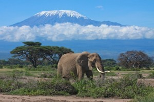 Amboseli National Park2