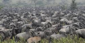 Ngorongoro-Conservation-Area-2