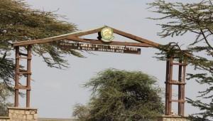 Serengeti 7