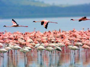 Lake Nakuru Day Trip Safari